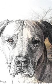 Illustration : Bleistift : Composing : Tierportrait