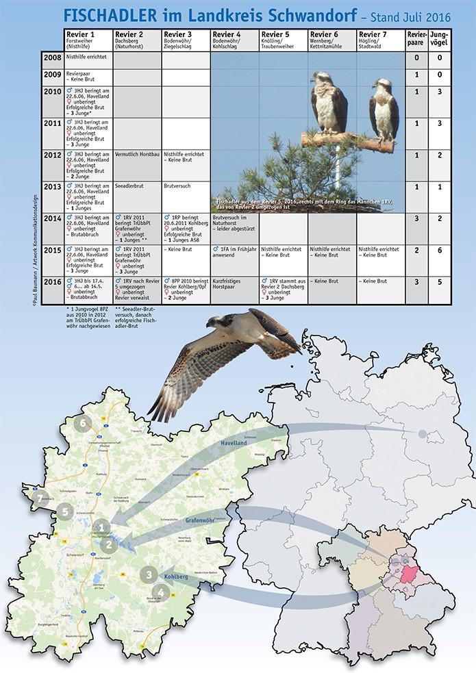 Infografik Populationsentwicklung Fischadler